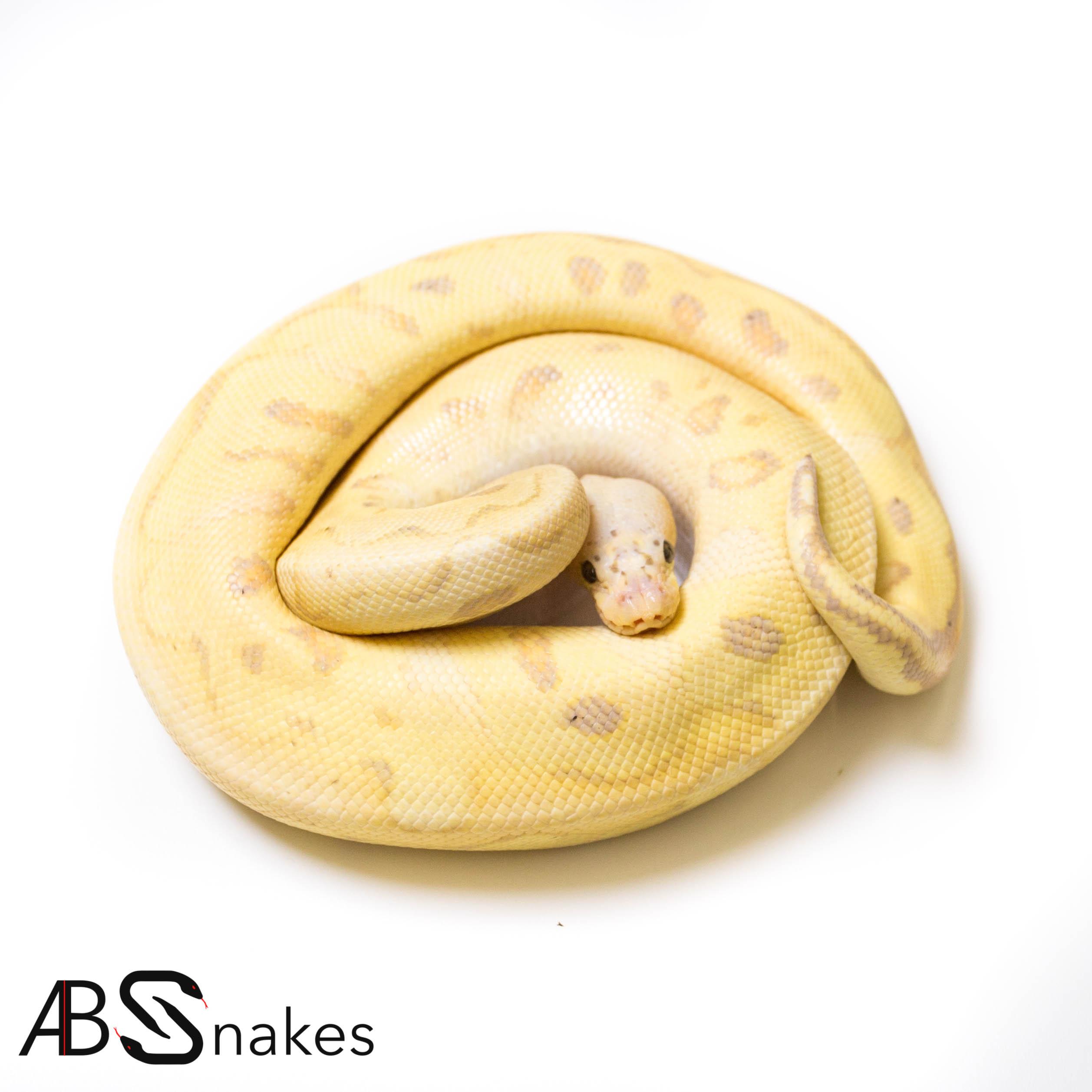 Pastel Banana Clown